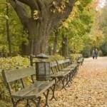 scena de toamna in parc